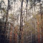 Berlin Trees between Buildings