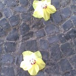 Rio de Janeiro Flowers on Pavement