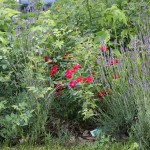 Wild and grown nature co-exist in ECLA of Bard's gardens.