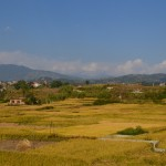 Rice fields, irrigated by the river on its way to Kathmandu. That rice should be consumed without caution.
