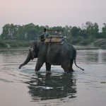 An elephant cooling down after a long day of work (Chitwan)
