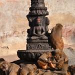 Monkeys in the temple
