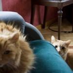 [1] Cat adventures at the Prague home