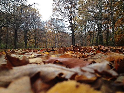 Tiergarten in fall 2014 - what it will probably look like in the future if we don't act (photo by the author)